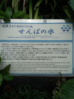 FJ310450.jpg